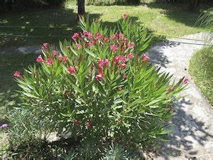 stunning jardin rocaille mediterraneen contemporary With amenagement jardin exterieur mediterraneen 5 creation jardin mediterraneen idee deco petit jardin