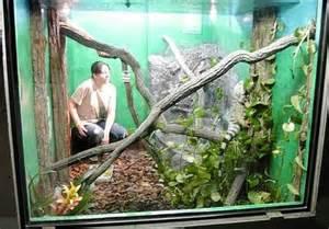 Green Iguana Habitat