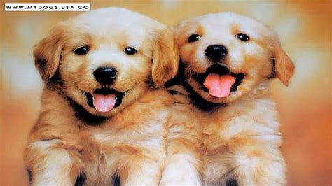 Epic Cutest Baby Dogs In The World