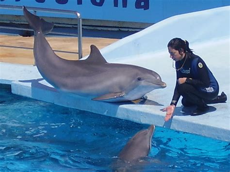 What Does Rdp Stand For by India Takes A Stand Against Captive Dolphins Divetalking