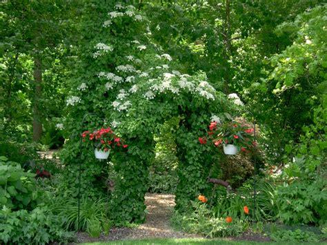Flowering Vines For Shade, For Flowering Vines Shade