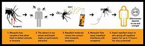 Insect Repellent Guide