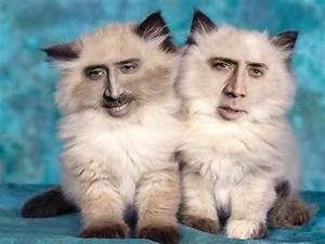 Nicolas-cage-cats • 14n: Twin terrors.