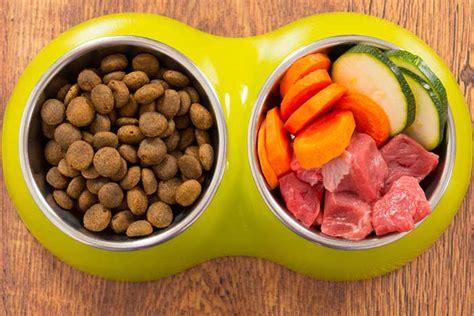 human food cats  eat craving catnip