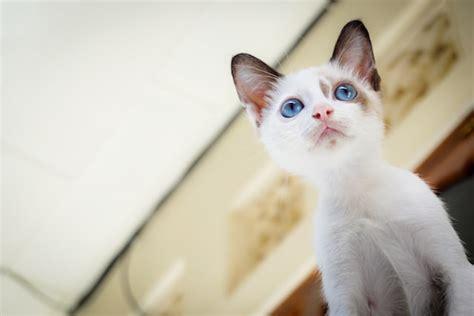 eyes kitten cat cats kittens fur born why looking feline young cute animal short tan blur sky ask domain sit