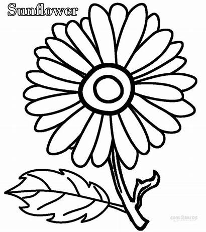 Coloring Flower Pages Single Printable Colorings