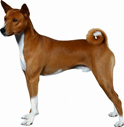 Dog Side Terrier Bull American Pit Pitbull