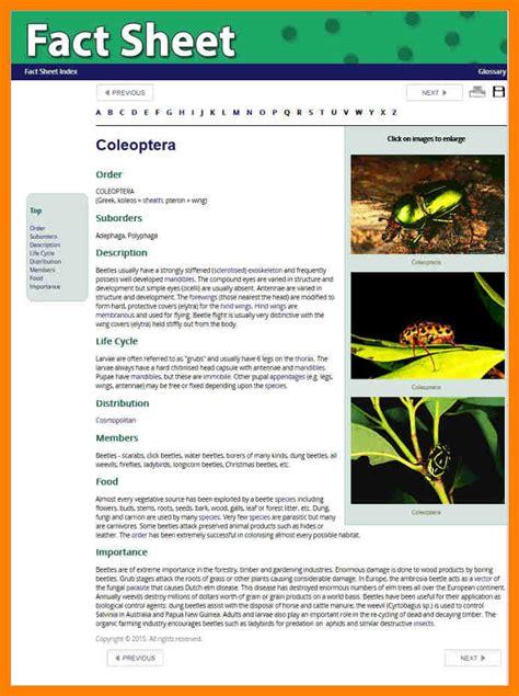Fact Sheet Template 5 Fact Sheet Template Microsoft Word Fancy Resume
