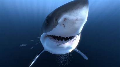 Sharks Vr 360 4k Virtual Amazing Close