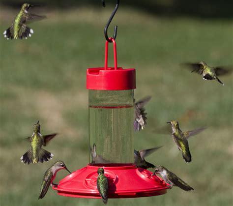 attract hummingbirds guaranteed  attract lots