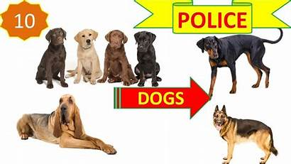 Breeds Police Dog Security