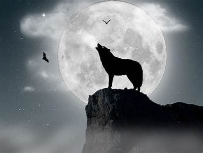 Wolf Wolves Moon Howling Wallpapers Background Desktop
