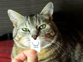 stupid cat cats stupid faces