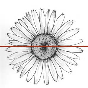 How to Draw Daisies Flowers
