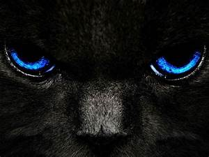 wallpapers: Black Cat Blue Eyes