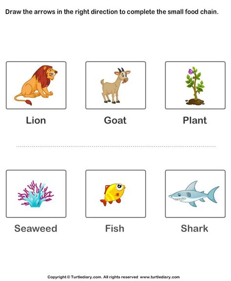complete  food chain fill  arrows  images