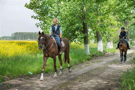 urlaub mit pferd heidefewo ferienunterkuenfte