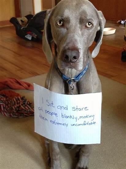 Dog Funny Shaming Joke Silly Stare Sit
