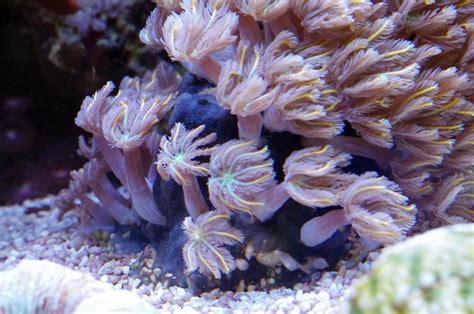 schwarzer schwamm was ist das unbekanntem auf der spur dein meerwasser forum f 252 r nanoriffe