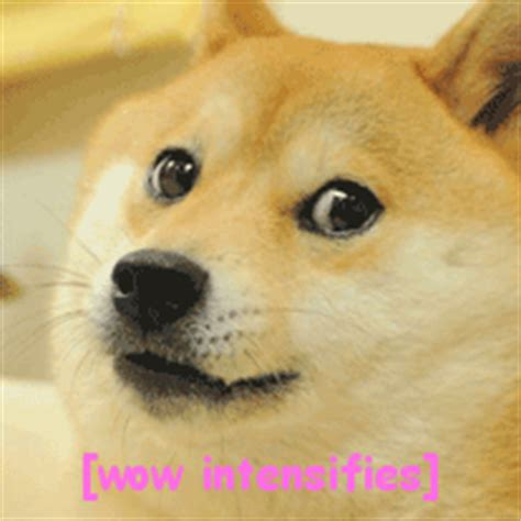 Meme Dog Wow - wow such dog much adorable aww