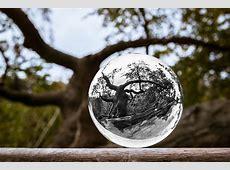 Glaskugel Baum Kugel · Kostenloses Foto auf Pixabay