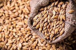 How To Grow And Use Barley At Home