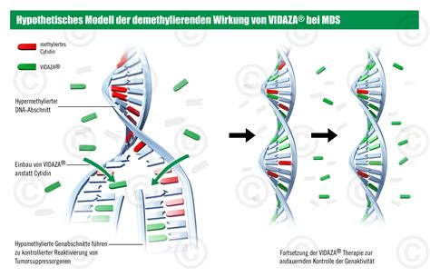 Cancer therapy and cell replication