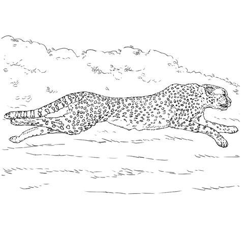 Cheetah Kleurplaat by Leuk Voor Een Jachtluipaard Is Supersnel