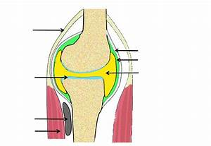 Labelled Diagram Of Synovial Joint