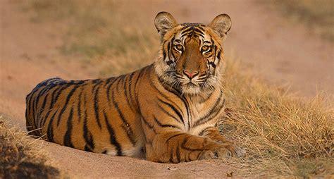 corbett jim park national india wildlife