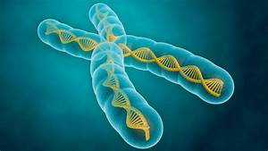 Fundamentals Of Genetics  The Genetics You Need To Know