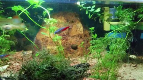 crevette pour aquarium eau douce mon aquarium eau douce 40 litres n 233 on barbus guppy crevette