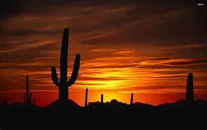 Desert Sunset Cactus Arizona Wallpapers Desktop Stoner