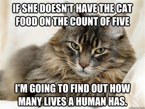 Food Cat Meme - if she doesn t have the cat food on the count of five i m going to find out how many lives a