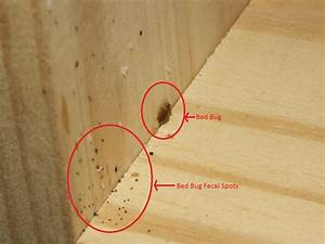 prepare for possible bed bugs september 2017 babies With bed bugs throw away everything