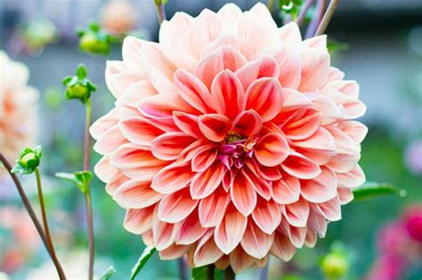 flowers for and summer homelife 10 best summer flowers