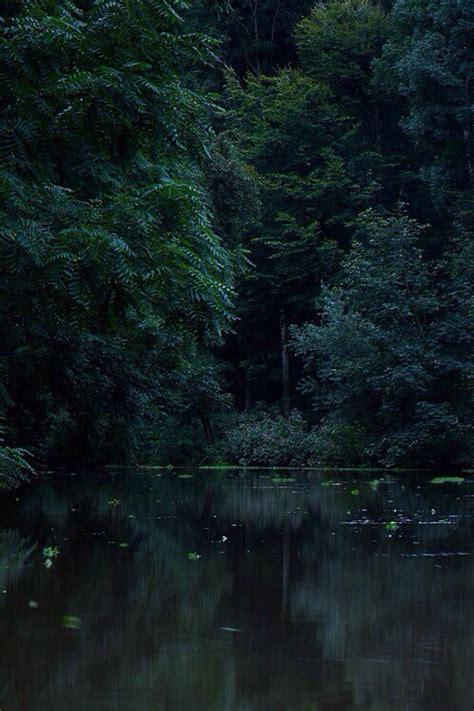 dark forest  tumblr