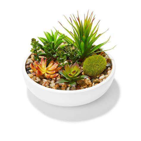 succulents in pot kmartnz
