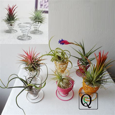 air plant egg cup tillandsia holder container flower