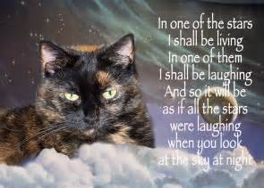 Grieving Loss of Pet Quotes Cat