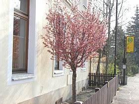 Kleine Bäume Für Vorgarten : kugelb ume zwergb ume vorgartengestaltung terrassen ~ Michelbontemps.com Haus und Dekorationen