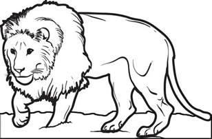 Male Lion Coloring Pages