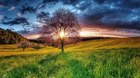 hd nature wallpapers backgrounds images pictures