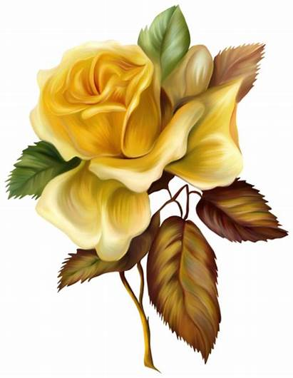 Yellow Rose Clipart Painted Roses Flower Yopriceville