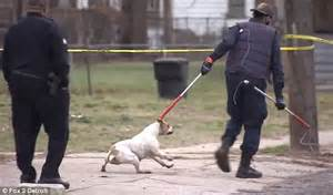 Detroit Boy Mauled To Death By 4 Escaped Pit Bulls As