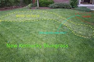 Adventures In Gardening: Tall fescue 3 weeks after ...
