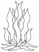 Seaweed Coloring Pages Printable Getcolorings Getdrawings sketch template