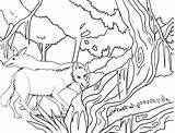 Coyote Coloring Pages Printable Cool2bkids sketch template