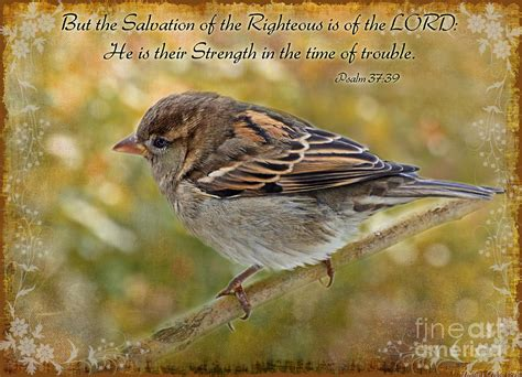 sparrow bible quotes quotesgram