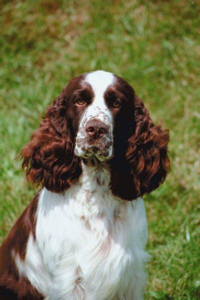 field   bench springer dog care
